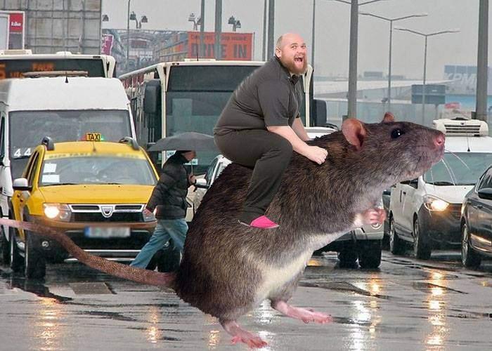 Adio, trafic! Un bucureștean a ajuns la muncă în timp util călare pe un șobolan