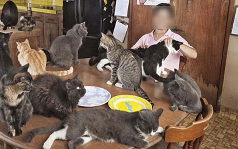 Femeia care avea 30 de pisici în garsonieră s-a mutat la 2 camere ca să ia şi câini