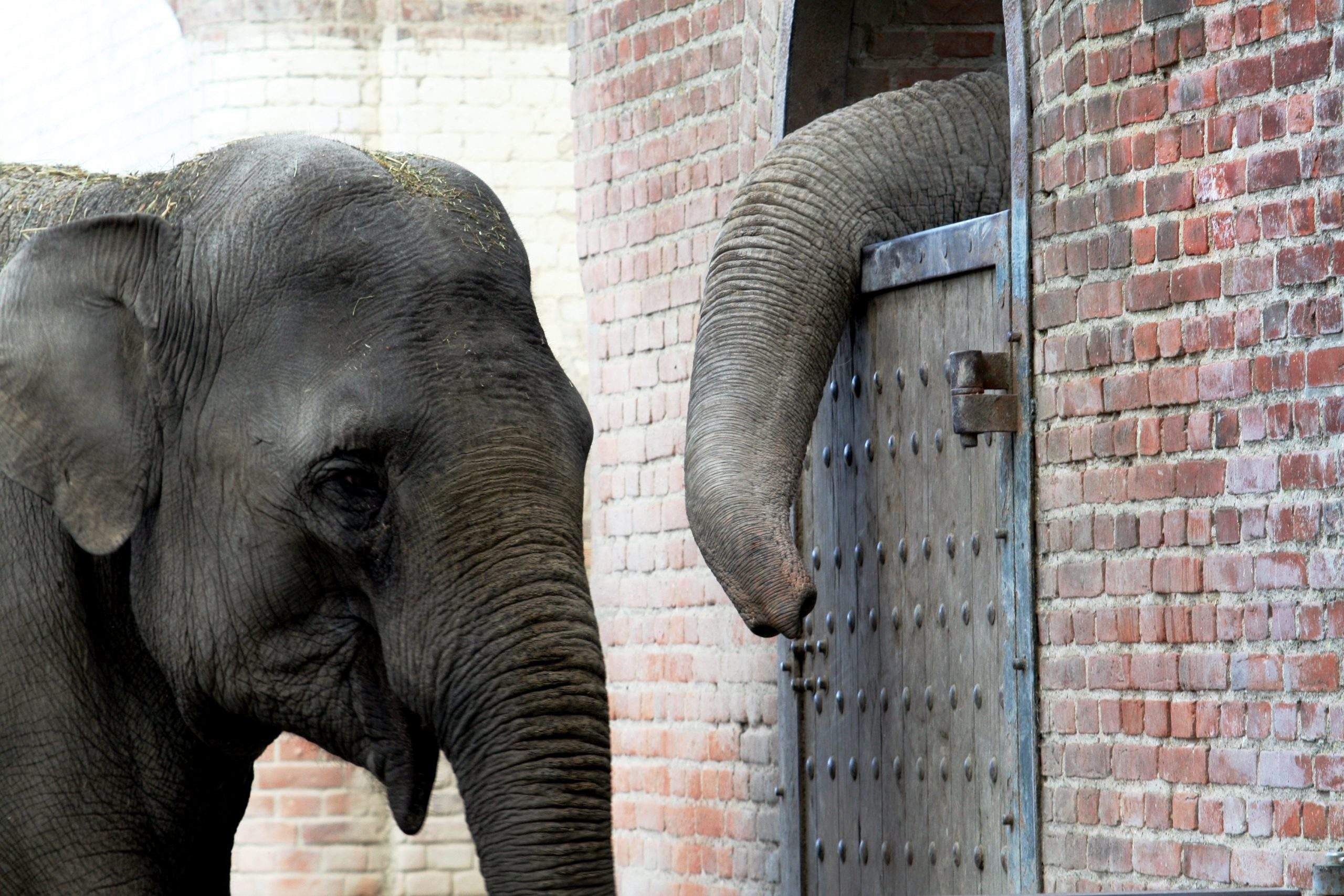 Sfaturi utile: cum să îţi alegi elefantul potrivit