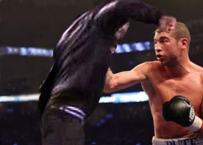 Bute se teme că un suporter violent ar putea intra în ring la meciul cu Johnson!