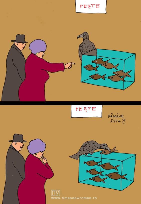 Cormoranul de la hipermarket