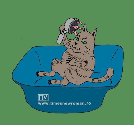 Duşul pentru pisici