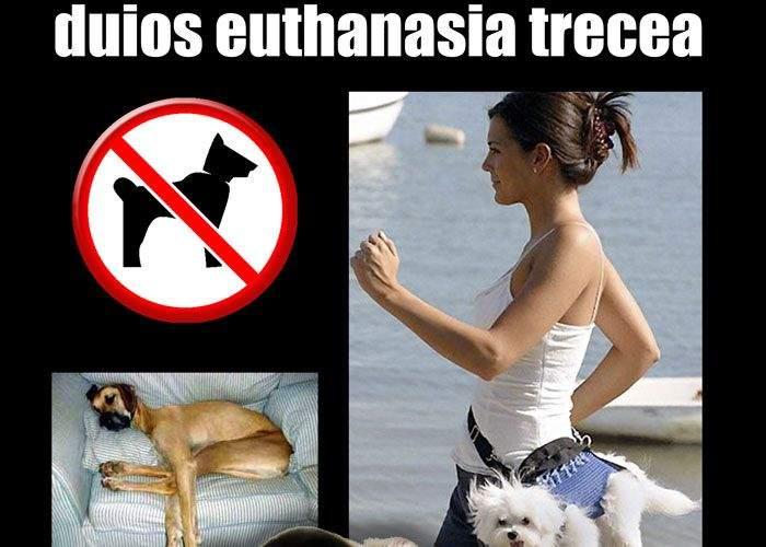 Reconcilierea dintre om şi câine comunitar a eşuat. Sfaturi practice pentru eutanasiere