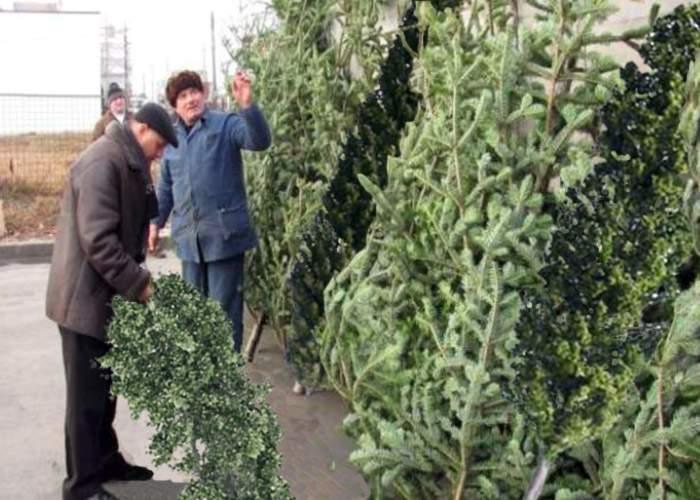 Mare atenţie în pieţe! Escrocii vând plopi pe post de brazi de Crăciun!