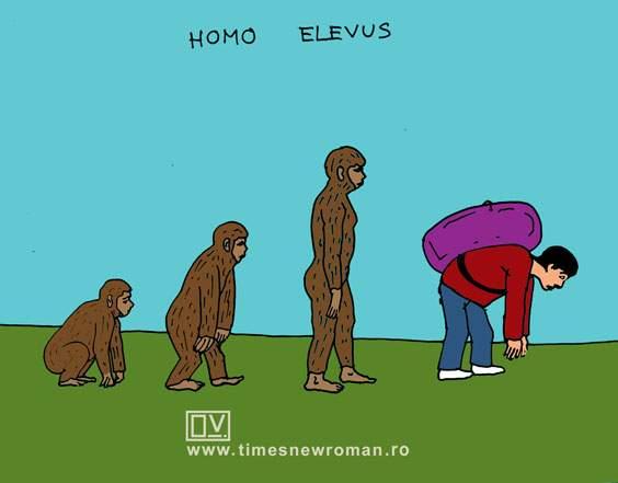 Homo elevus