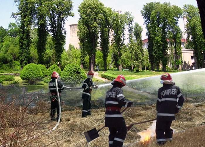 Incendiu de mirişte într-o seră din Grădina Botanică!