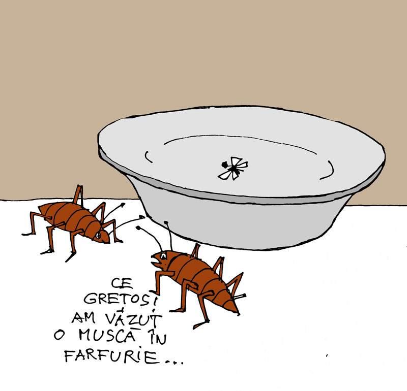 O-muscă-în-farfurie