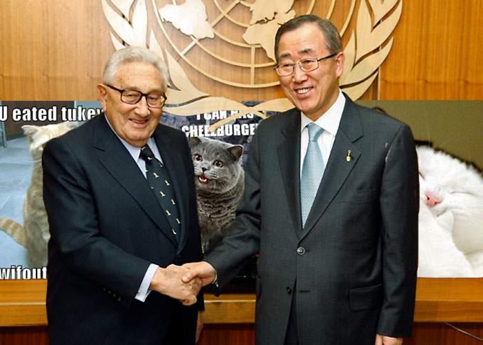 ONU trage un semnal de alarmă: mai avem poze cu pisicuţe drăguţe doar pentru 5 ani!