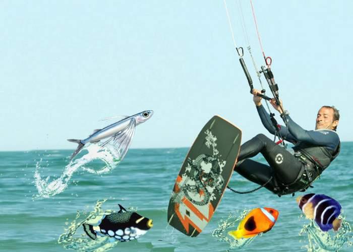 Radu Mazăre promite să eutanasieze peştii fără stăpân din Constanţa