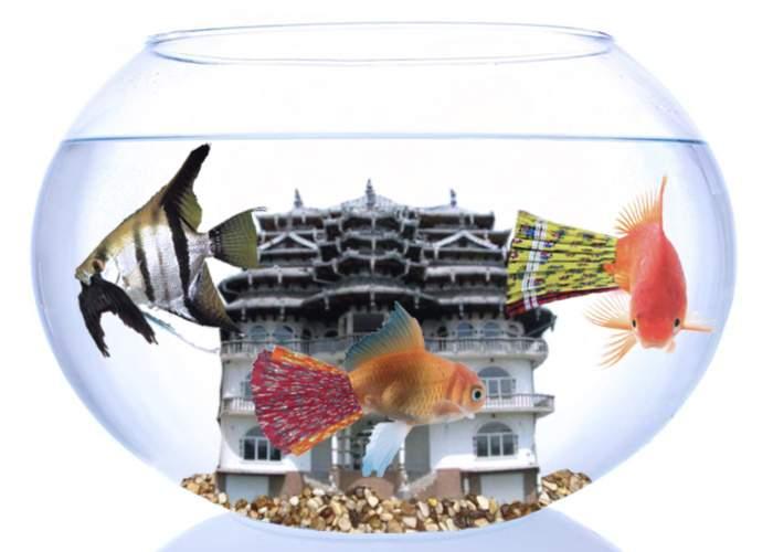 Regele Cioabă şi-a luat un acvariu cu peşti piranda!