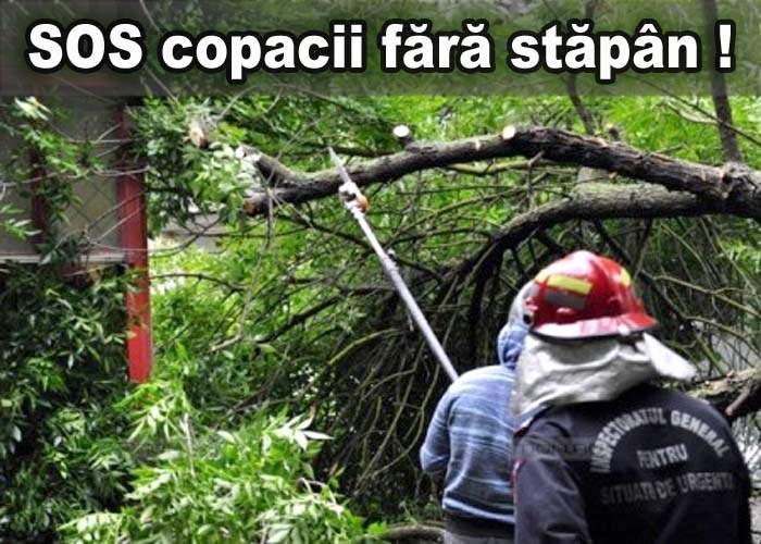 Copacii fără stăpân terorizează Bucureştiul