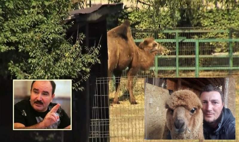 Poliţistul Godină, care are o alpaca acasă, şocat că la Nuţu Cămătaru s-a găsit o cămilă