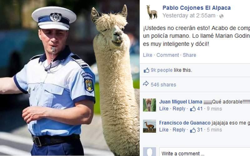 """O alpaca a devenit celebră pe internet după ce şi-a luat poliţist: """"E foarte inteligent!"""""""