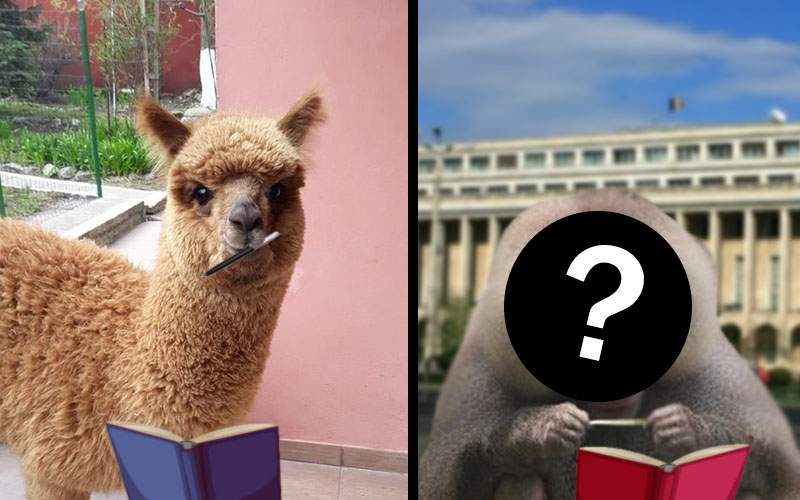 Unde s-a ajuns! După alpaca lui Godină, acum vrea și-un pavian cu mantie să scoată o carte