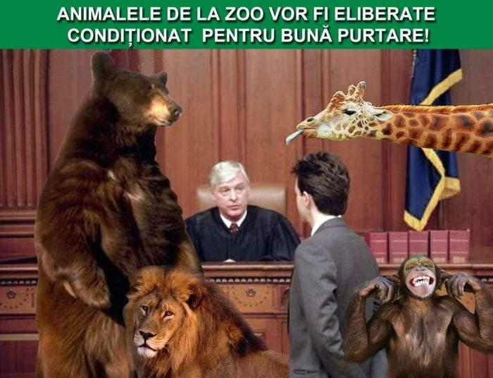 Animalele ţinute în captivitate la Zoo vor fi eliberate condiţionat, pentru bună purtare