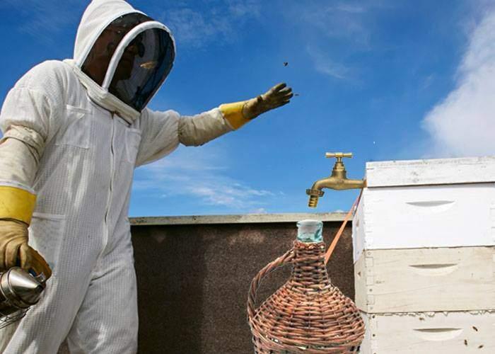 Pentru că a băut tot vinul din toamnă, un apicultor din Vaslui a învăţat albinele să facă ţuică