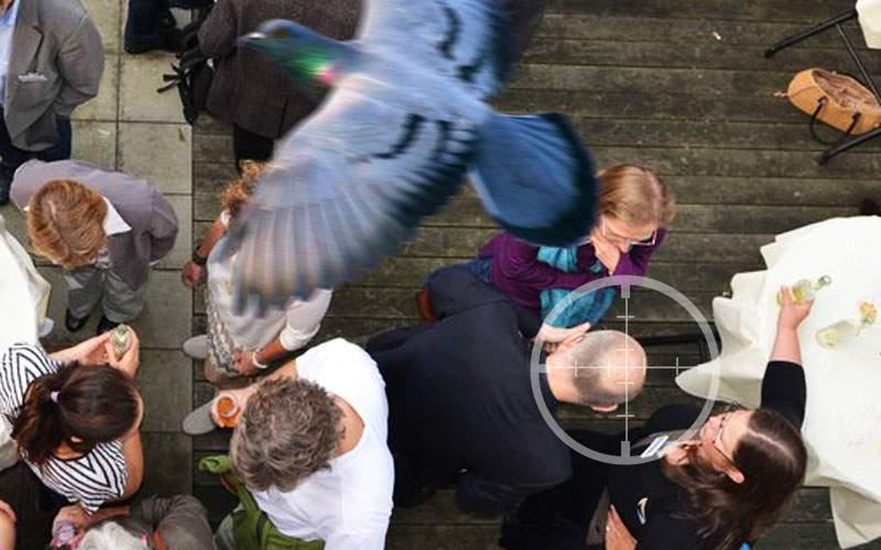 Studiu! Bărbaţii cu chelie sunt cu 30% mai atrăgători pentru porumbei