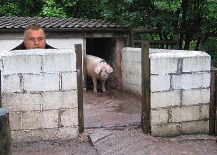 Baron local, tăiat din greşeală şi făcut cârnaţi după ce s-a ascuns de DNA în coteţul porcului