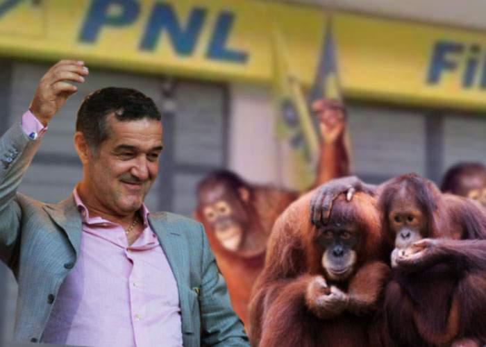 """Gigi Becali la congresul USL: """"Alături de mine vor veni în PNL alţi 300 de urangutani"""""""