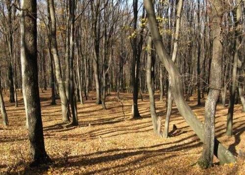"""Bianca Brad strânge semnături pentru înlocuirea termenului """"copac"""" cu """"pom"""""""