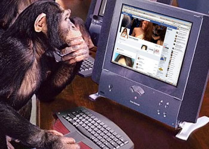 Studiu! 98% dintre cei care dau Like şi Share la postările Biancăi Drăguşanu sunt cimpanzei