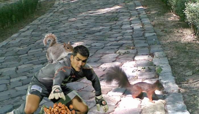 Veveriţele din Herăstrău, în pericol. Rapidiştii au dat iama în ascunzătorile cu ghinde şi alune!