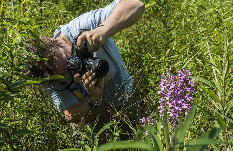 O specie nouă de floare a fost numită Ion, ca să dea jumătate din români de băut azi