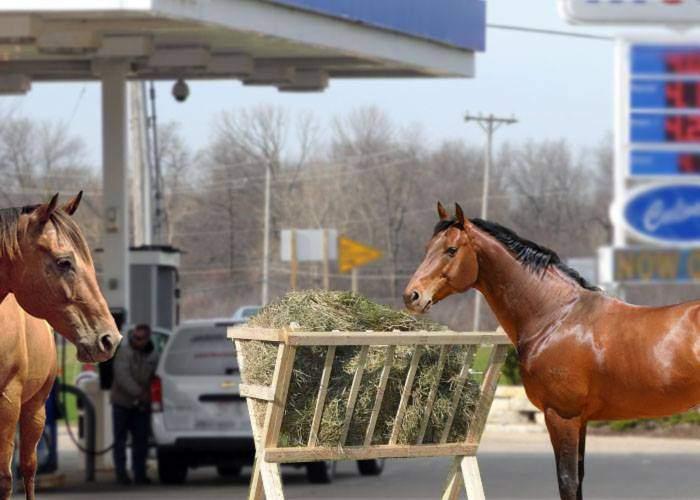 Transport ecologic! România va instala iesle pentru cai în toate benzinăriile