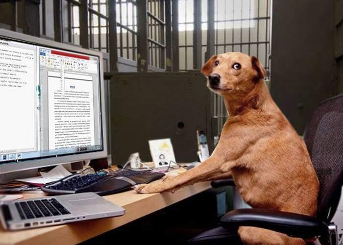 Din nou maidanezi pe străzi! Un câine a scris o lucrare științifică și a fost eliberat de hingheri