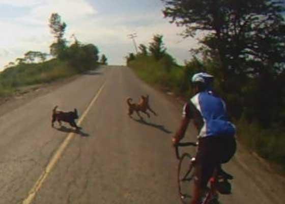 Mulţumim, Mîndruţă! Toţi maidanezii din Bucureşti au alergat după biciclişti până la mare