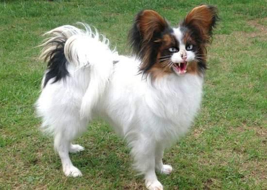 Un savant a încrucișat câinele cu pisica și a creat un câine care nu vine când îl chemi