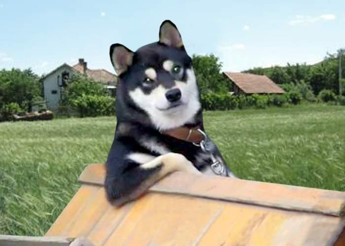 Fenomen misterios: Câinele ardelean simte cutremurele la câteva ore după ce au avut loc