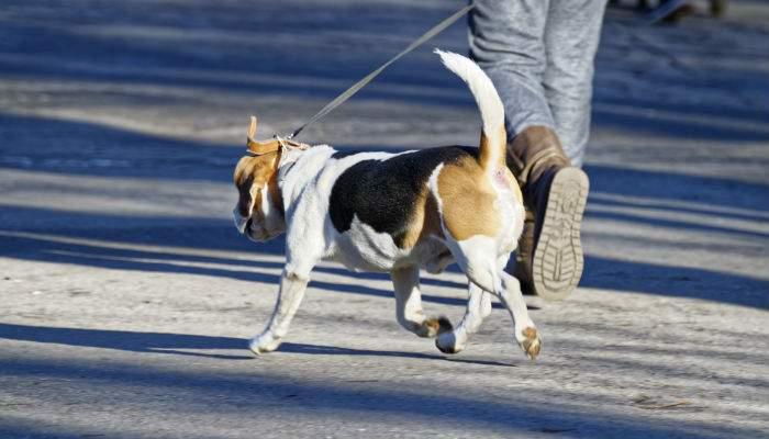 Asta înseamnă civilizaţie! Un român care a uitat pungile acasă a împins căcatul înapoi în câine