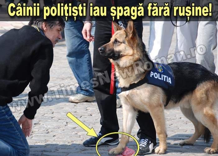 Câinele polițist corupt, pus sub acuzare pentru luare de mită în formă feliată