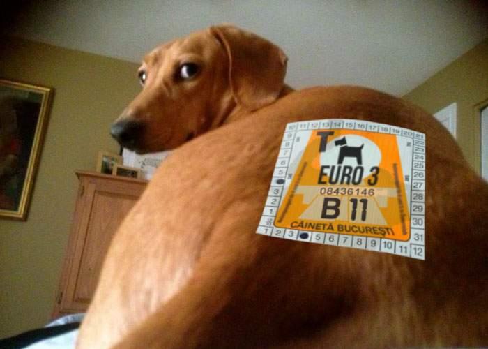 Capitala introduce Câineta, o taxă pentru stăpânii care nu strâng căcatul câinilor