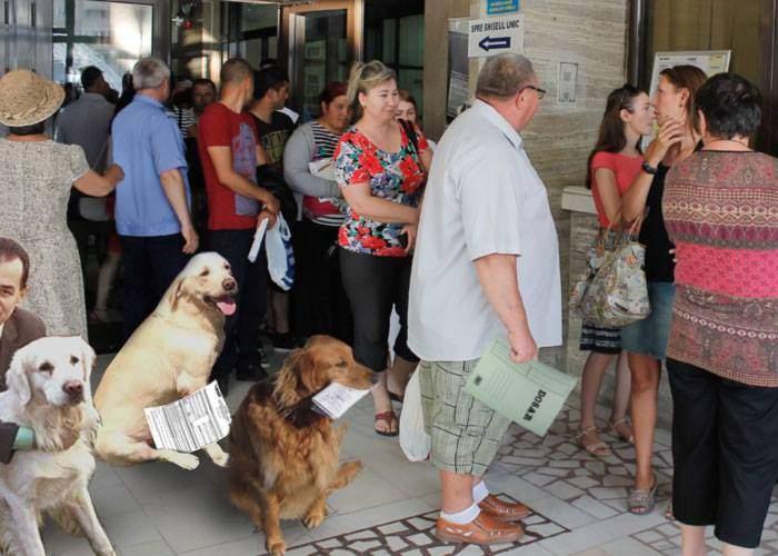 Guvernul introduce Declaraţia 700, ca să impoziteze câinii care au luat bani de la Soros la proteste