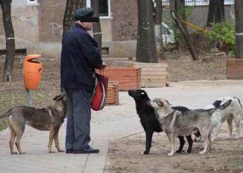 """Bucureştenii iau măsuri aspre împotriva câinilor de la blocuri: """"Îi vom hrăni doar o dată pe zi"""""""