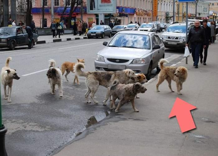 Oprescu: Gata cu câinii fără stăpân! Cei mai fioroşi câini vor fi numiţi stăpâni peste restul
