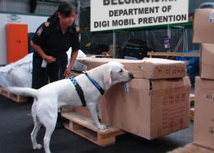 Măsuri dure! Vameşii din Belgravistan vor avea câini dresaţi să miroasă abonamente Digi Mobil