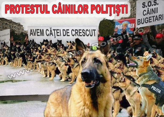 Câinii poliţişti au manifestat paşnic în faţa Guvenului