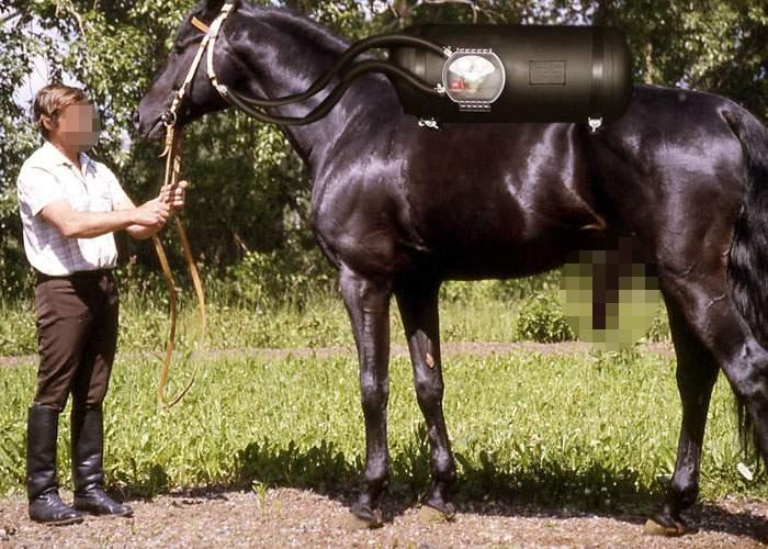 Copleşiţi de preţul fânului, 2 din 3 români au încercat să-şi doteze calul cu instalaţie de GPL