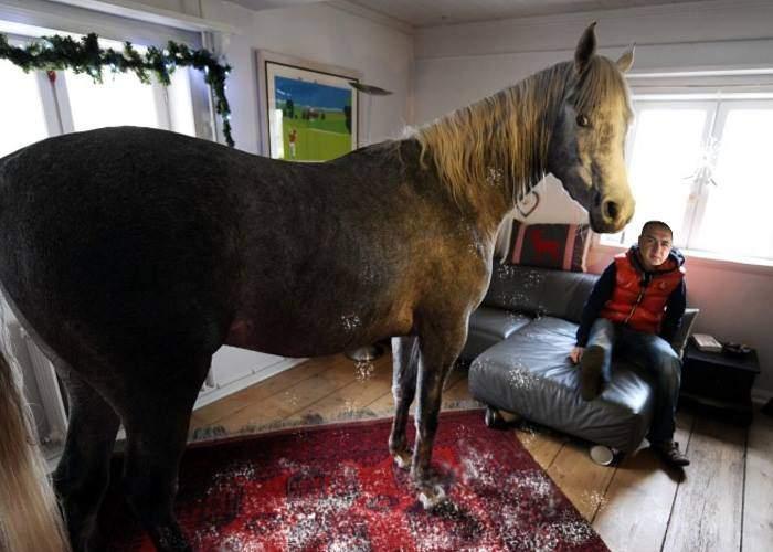 Leo din Strehaia a schimbat şamponul calului, că-i umplea covorul din sufragerie cu mătreaţă