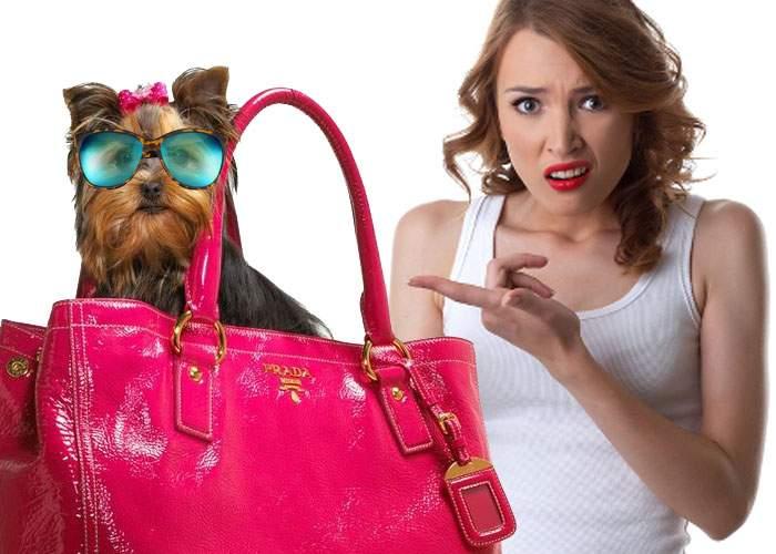 Scandal în Dorobanţi, după ce s-au întâlnit două piţipoance cu câinii îmbrăcaţi şi machiaţi la fel