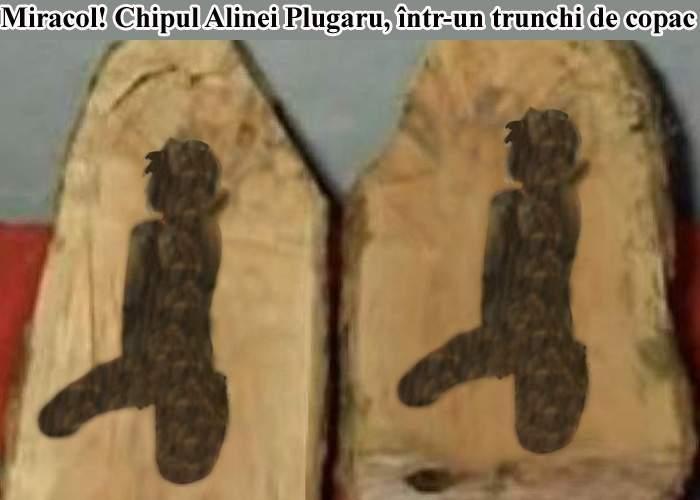 Miracol! Un credincios a găsit chipul Alinei Plugaru într-un trunchi de copac