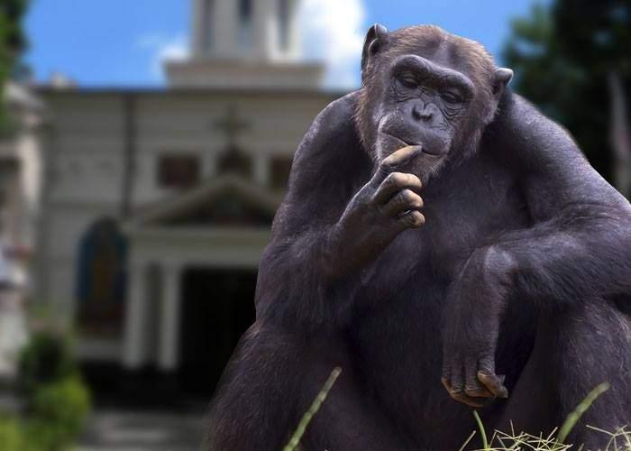 Dovada care demontează secole de darwinism. Și cimpanzeii își fac cruce când trec pe lângă biserică