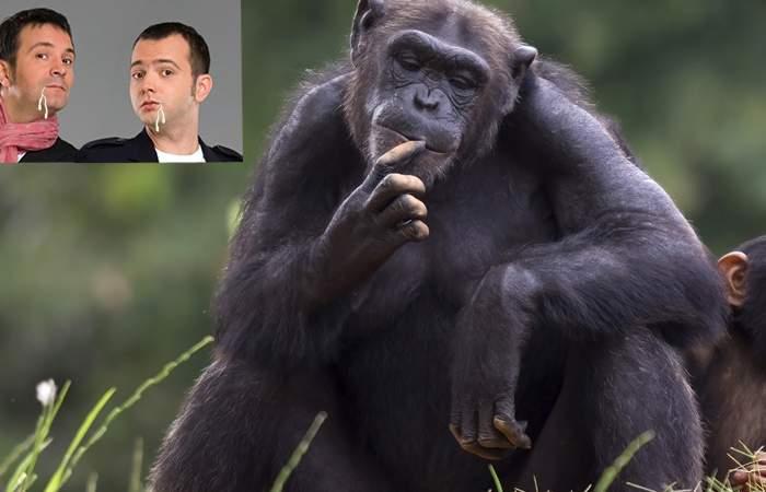 """Reacție demnă a unui cimpanzeu de la Zoo Băneasa: """"Nu mă cobor la nivelul lui Buzdugan și Morar"""""""