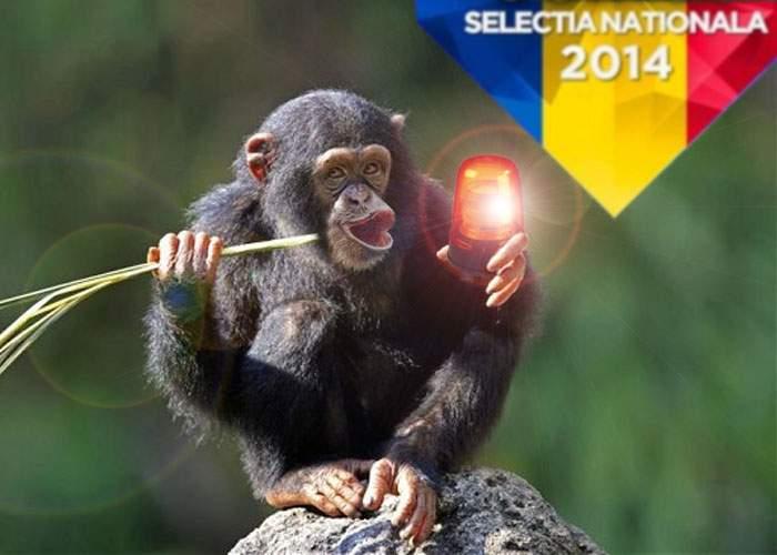 România plusează! Anul acesta vom trimite la Eurovision un cimpanzeu cu girofar