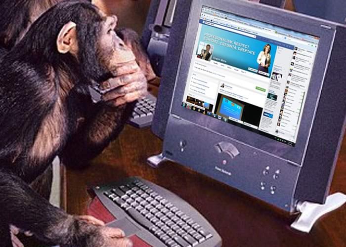 Maria Grapini a angajat un cimpanzeu ca să-i corecteze greşelile din statusurile de pe Facebook