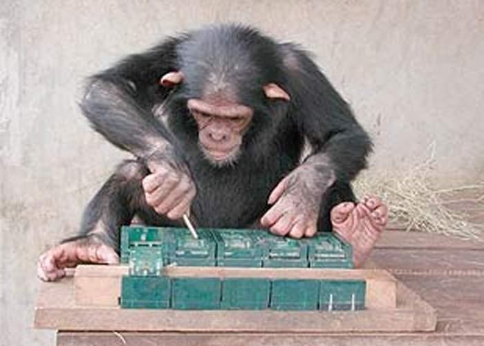 Cimpanzeu, dat afară de la Click după ce colegii l-au surprins încercând să evolueze în om