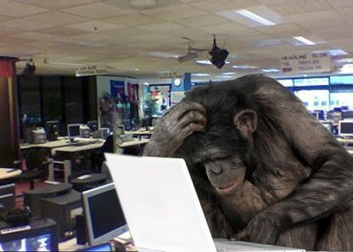 Discriminare! Unui cimpanzeu i s-a refuzat postul de redactor CanCan pentru că avea IQ- ul prea mare